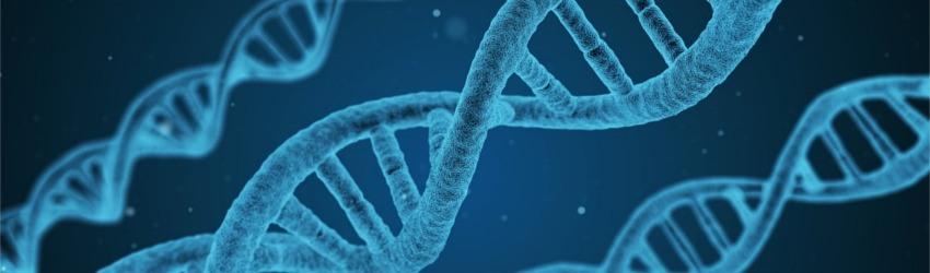Nikotyna uszkadza DNA nasienia