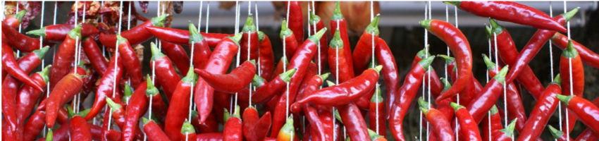 Papryka chili